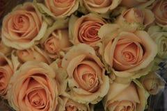 Steg rosaceaen Arkivfoton