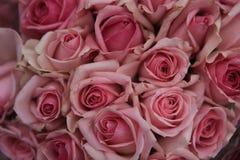 Steg rosaceaen Fotografering för Bildbyråer