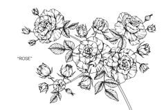 Steg skissar blommateckningen och Royaltyfri Foto
