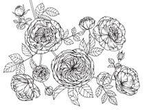 Steg skissar blommor som drar och, med linje-konst Royaltyfria Bilder