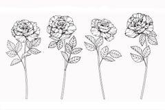 Steg skissar blommor som drar och, med linje-konst Arkivfoton