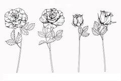 Steg skissar blommor som drar och, med linje-konst Royaltyfri Bild