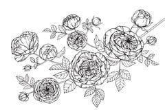 Steg skissar blommor som drar och, med linje-konst på vit backgroun Arkivfoton