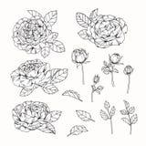 Steg skissar blommor som drar och, med linje-konst på vit backgroun Royaltyfri Bild