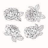 Steg skissar blommor som drar och, med linje-konst på vit backgroun Fotografering för Bildbyråer