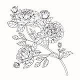 Steg skissar blommor som drar och, med linje-konst på vit backgroun Royaltyfri Foto