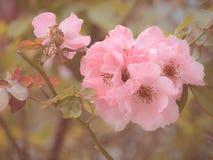 Steg steg blomman i trädgården som gjordes med tappningfiltret, under sunli Arkivfoton
