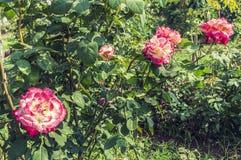 Steg trädgården Fotografering för Bildbyråer