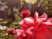 Steg trädgården royaltyfri bild