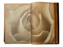 steg utskrivavna gammala öppna sidor för boken Arkivfoton