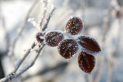 steg vintern Arkivfoto