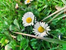 Steg vita blommor royaltyfri fotografi
