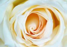 steg white Royaltyfri Fotografi