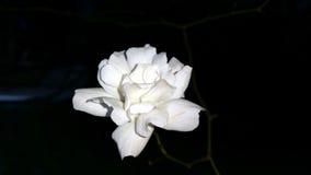 steg white Royaltyfri Foto