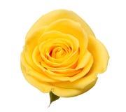 steg yellow Royaltyfri Foto