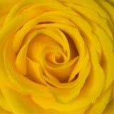 steg yellow Arkivfoto