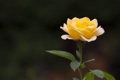 steg yellow Royaltyfri Bild