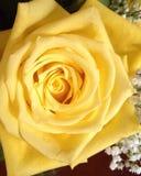 steg yellow Fotografering för Bildbyråer
