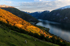 Stegastein Aurland Fjord Norway. During glowing sunset Stock Photography