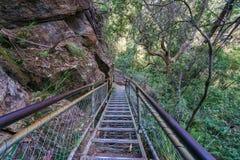 Stege i det jätte- trappaspåret, blåa berg, Australien 2 arkivbilder