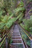 Stege i det jätte- trappaspåret, blåa berg, Australien 3 royaltyfria bilder