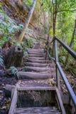 Stege i det jätte- trappaspåret, blåa berg, Australien 4 royaltyfri fotografi