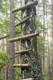 Stege på träd royaltyfri foto