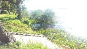 Stege som går ner till en flod royaltyfri foto