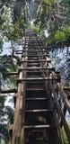Stege som leder upp in i treehouse arkivbilder