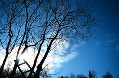 Stege till solen som lutar på träd arkivfoto