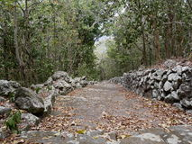 Stegeslingan, Saba Royaltyfria Bilder