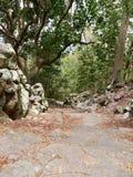 Stegeslingan, Saba Arkivbilder