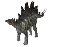 Stegosauro isolato Immagini Stock Libere da Diritti