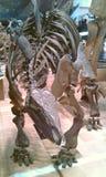 Stegosauro in Mojiko Fotografia Stock Libera da Diritti