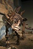 stegosaurus imagens de stock