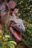 stegosaurus Στοκ εικόνες με δικαίωμα ελεύθερης χρήσης