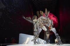 stegosaurus Fotografía de archivo libre de regalías