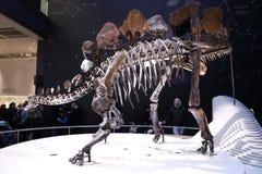 stegosaurus Arkivbild