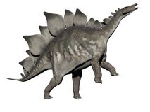 Stegosaurus dinosaur - 3d render Royalty Free Stock Photo