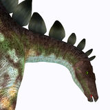 Stegosaurus Dinosaur Head Stock Photos