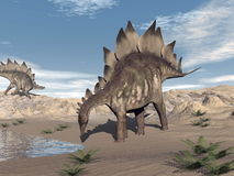Stegosaurus near water - 3D render Stock Images