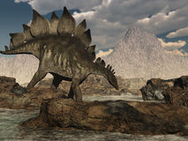 Stegosaurus que vagueia Foto de Stock Royalty Free