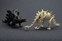 Stegosaurus toy and stegosaurus skeleton. On a dark background Stock Photography