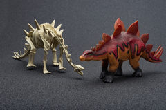 Stegosaurus toy and stegosaurus skeleton. On a dark background Stock Images