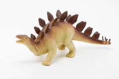 Stegosaurus on White Royalty Free Stock Image