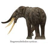 Stegotetrabelodon Elephant with Font Royalty Free Stock Image