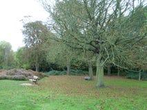 Stehen Sie Ecke nahe dem Baum im königlichen Park still Stockfotografie