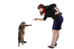 Stehende Katze Stockfoto