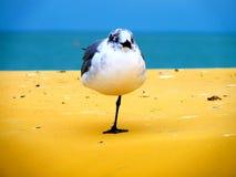 Stehende Möve auf dem Golf von Mexiko Lizenzfreie Stockfotos