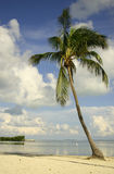 Stehende Palme Stockbild